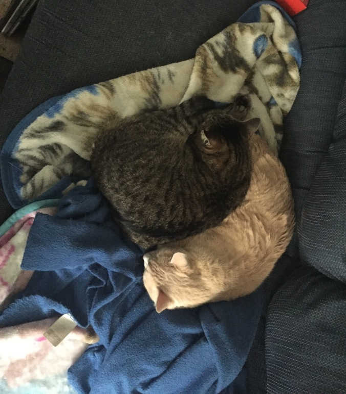 Catception: cats sleeping on a cat blanket