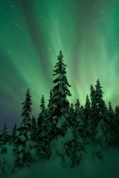 Winter Beneath the Northern Lights