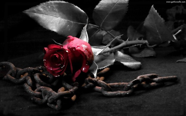 rose-in-chains